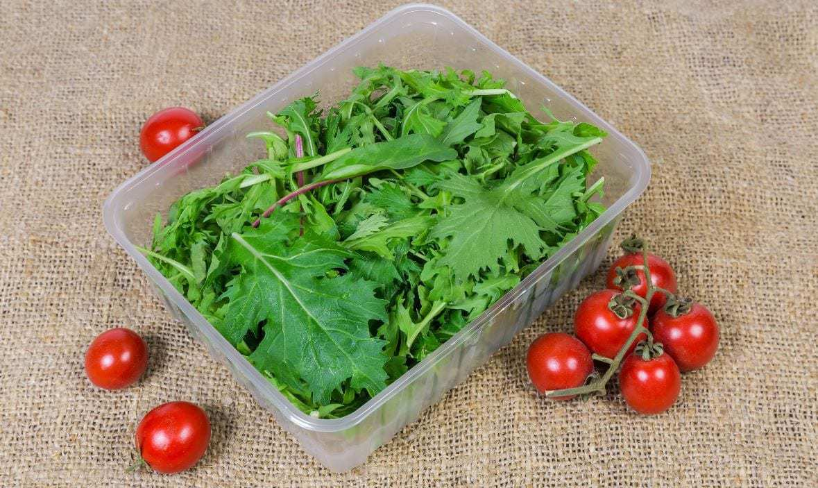 Storage Containers for Leafy Greens