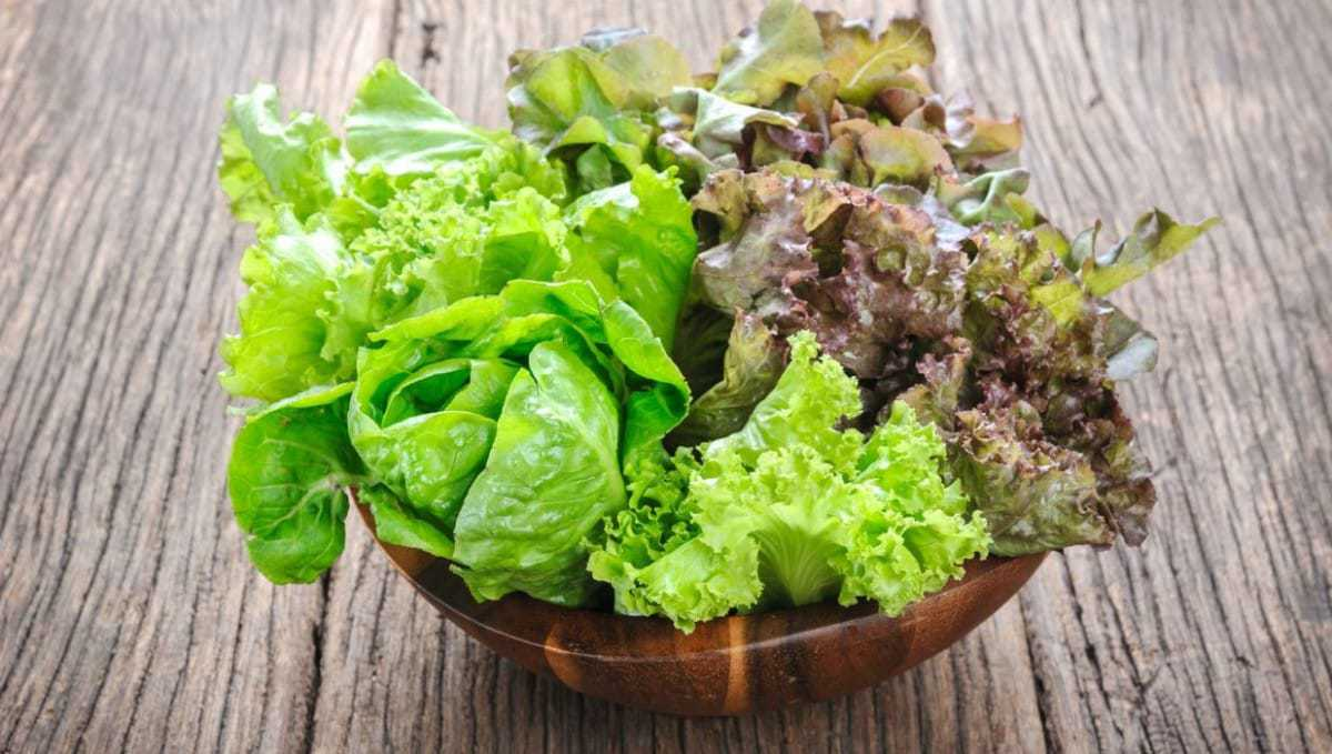 What Is the Lowest Carb Lettuce
