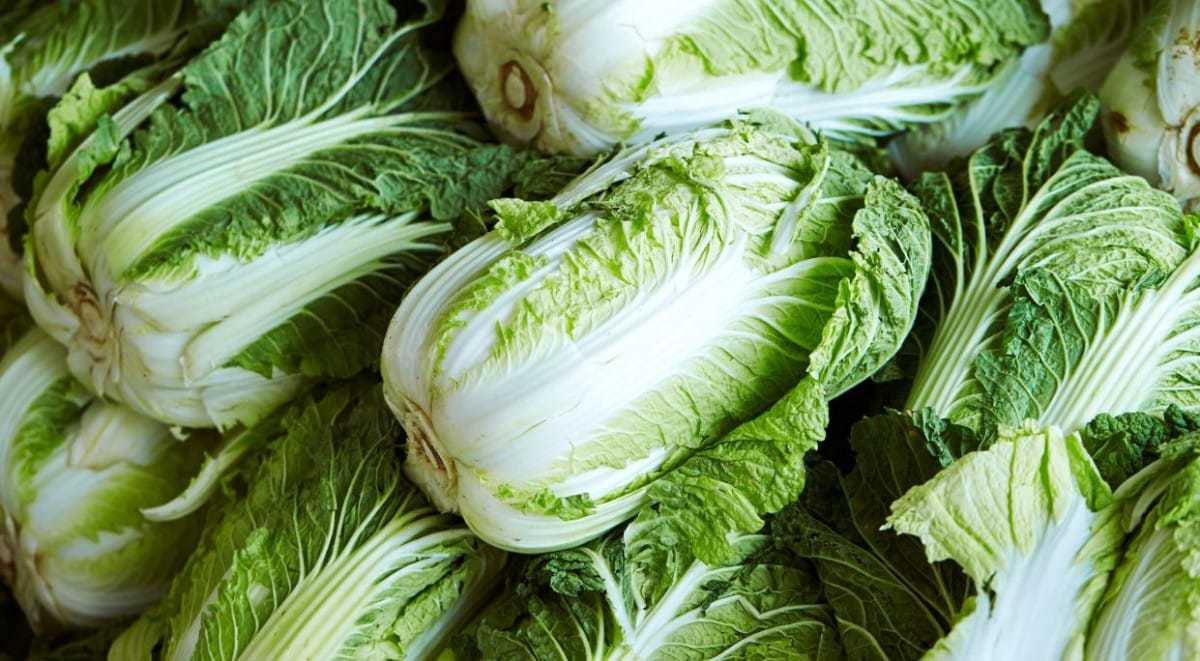 benefits of chinese cabbage